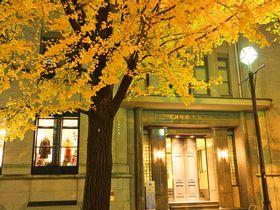 黄金色のトンネルに感動!横浜「日本大通り」のイチョウ並木