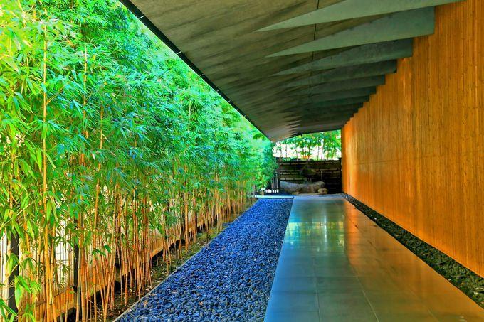 入館前から竹の美しさに惚れ惚れ!
