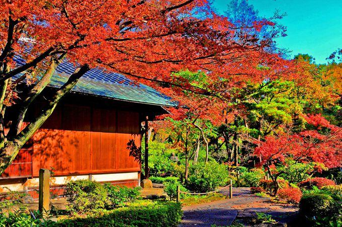庭園内には茶室があちこちに!