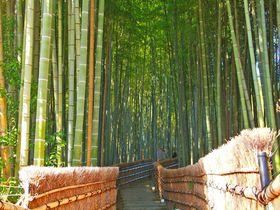 見所は紅葉だけでない!竹林の先は何処へ?京都「化野念仏寺」