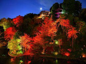 紅葉ライトアップと素敵な和食を!「ホテル椿山荘東京庭園」