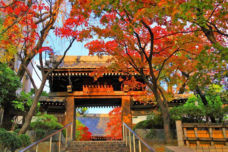 山門越しの真っ赤な紅葉に吸い寄せられて!東京「法輪寺」