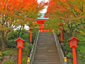 真っ赤な紅葉を見た後は開運上昇を願って!東京「穴八幡宮」