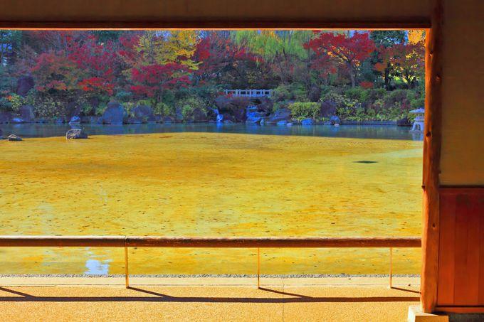 東屋から見る池周辺も絶景!