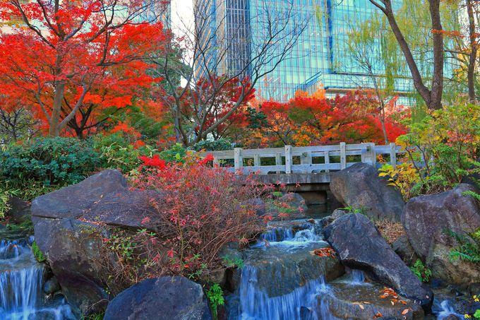 「檜町公園」へ入ると迎えてくれる紅葉の回廊