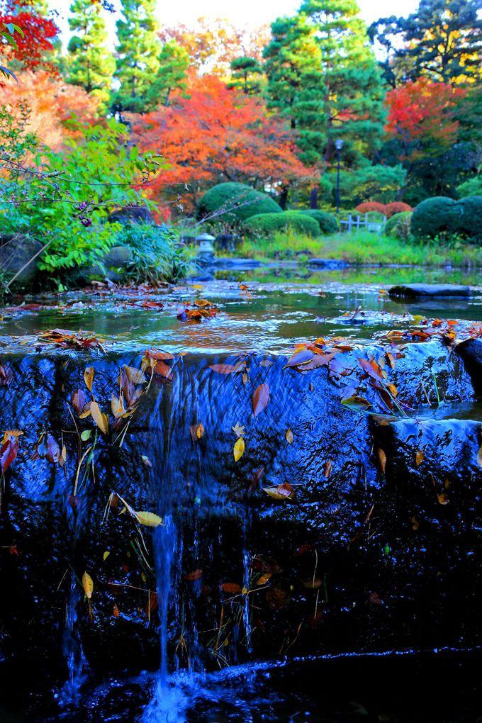 池の中央には小さな滝も!