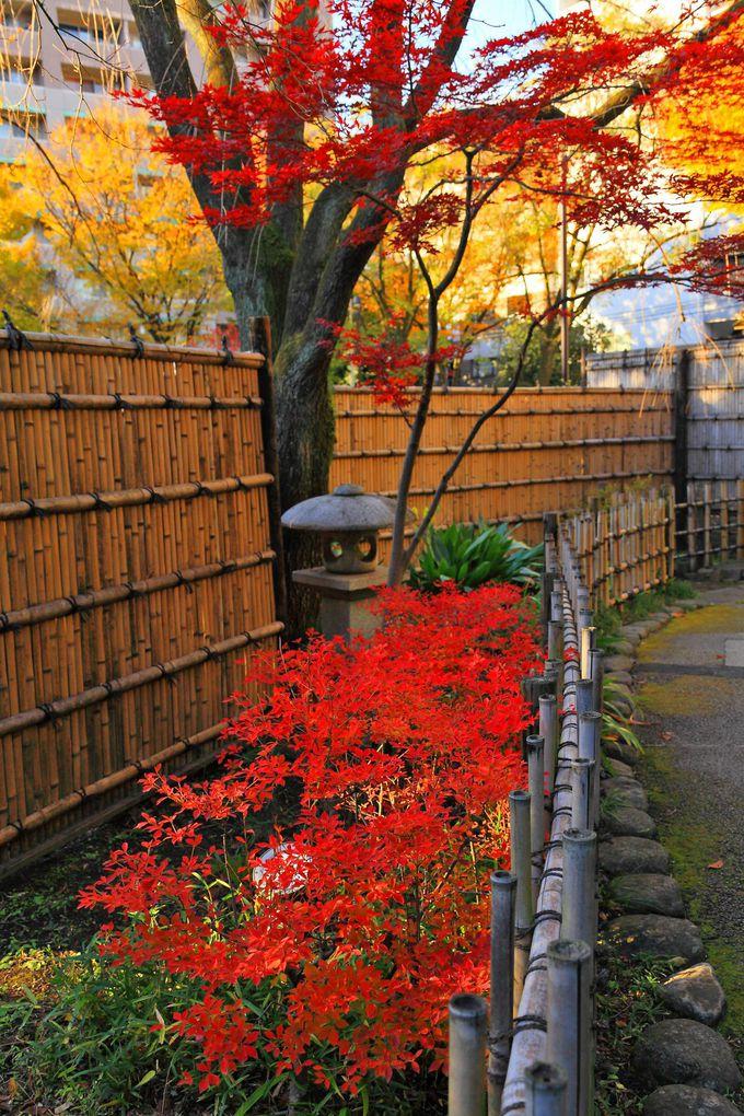 いかにも日本庭園らしい入口