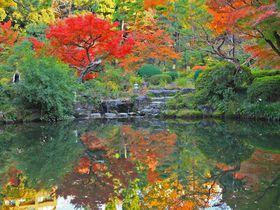 東京・早稲田の穴場紅葉スポット!静かで落ち着く「甘泉園公園」