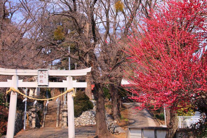 町田でも住宅街の中に位置する「南大谷天神社」