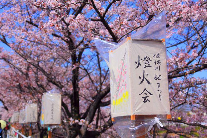 桜が咲く季節に行われる「佐保川桜まつり」も必見!
