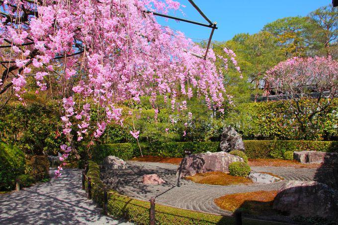 「退蔵院」の見どころといえばここ!「陰陽の庭」