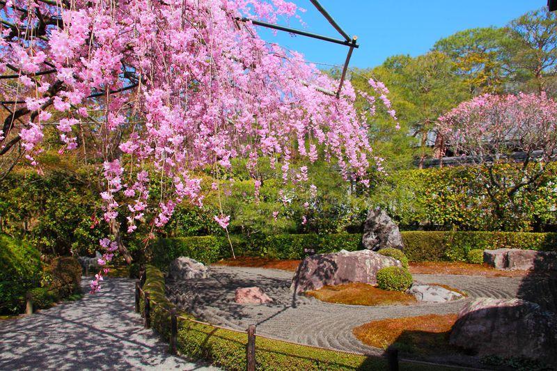 陰と陽どちらが好み?しだれ桜と枯山水が美しい京都「退蔵院」
