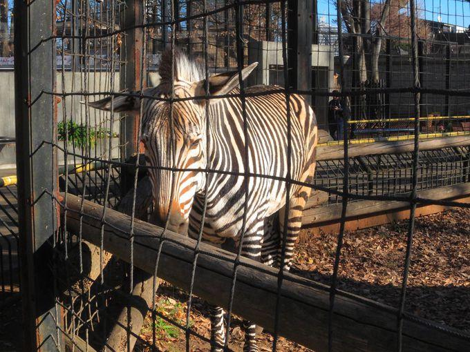 「夢見ヶ崎動物公園」に属する動物たち