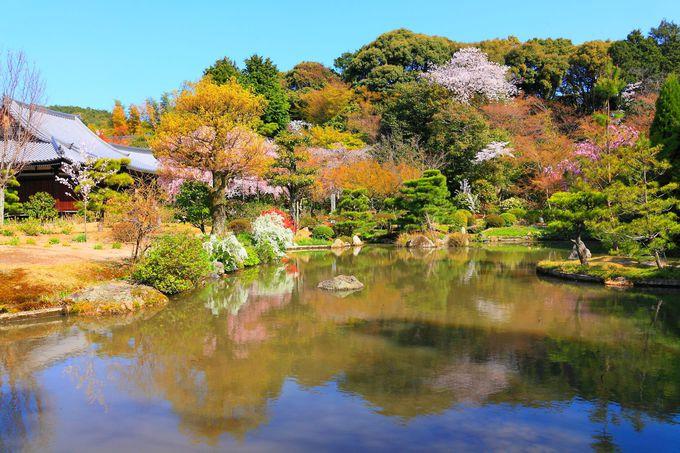 いつ訪問しても綺麗な池泉回遊式庭園へ!