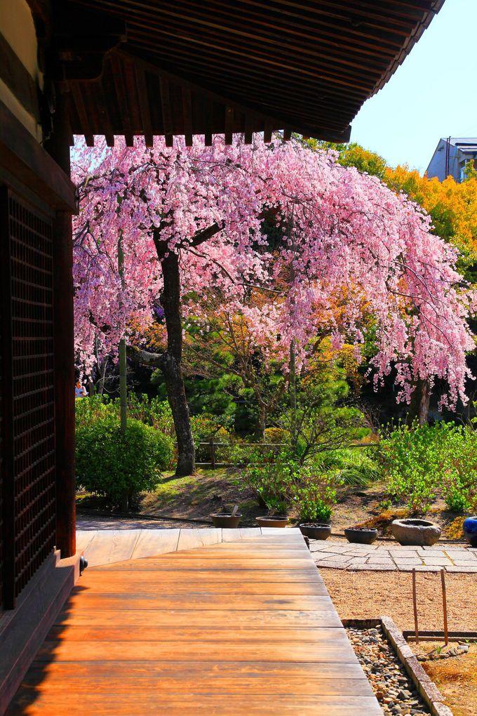 礼堂の回廊から見る桜もオススメ!