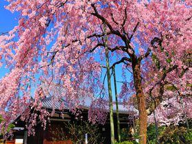 4月の女子旅におすすめ!春の旅行先10選