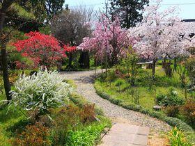 春の花に囲まれた美しい庭園は必見!尼寺で有名な「法華寺」