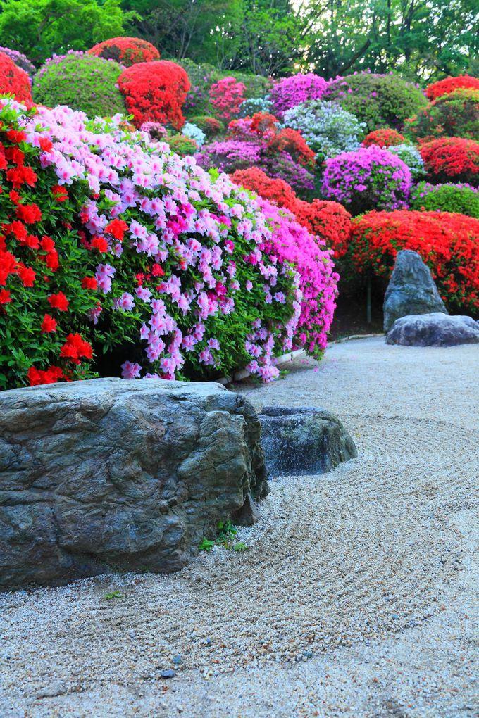 満開のつつじと枯山水庭園のコラボレーションが絶妙!