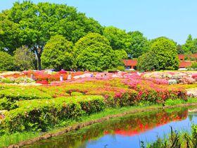 GWが狙い目!様々な花が咲く調布市「神代植物公園」はスケール大!