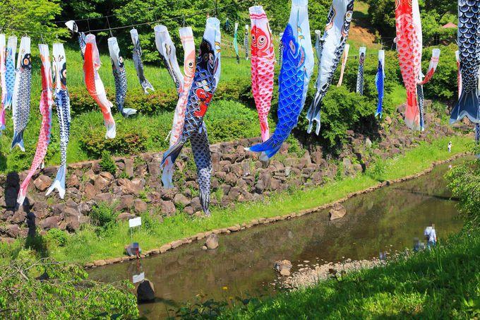 「中ノ谷池」の池上に掲げられたこいのぼり