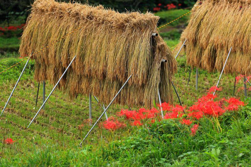 稲木とのコラボは早秋を代表するコラボ!