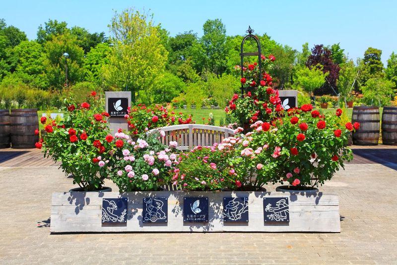 バラ好きにたまらない!神奈川県平塚市にある「花菜ガーデン」