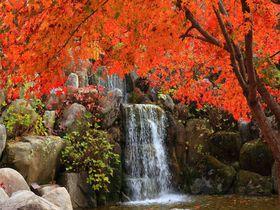 紅葉と滝とのコラボは息を呑む美しさ!山梨「山中湖花の都公園」