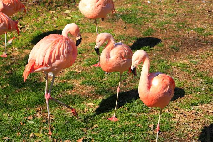 園内にいる様々な動物たち