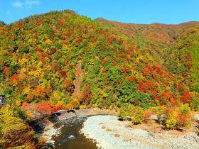 紅葉と清流のコラボは息を呑むほどの美しさ!山梨「道志村」