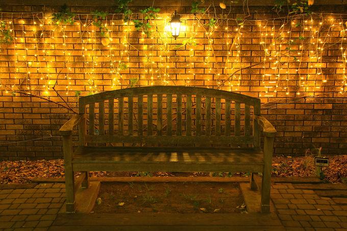 多くのイルミネーションが灯る公園内は被写体多き!