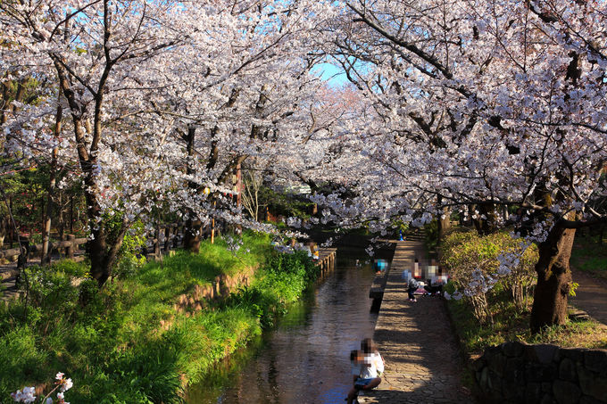 川崎市緑化センターの中を突き抜ける「二ヶ領用水」