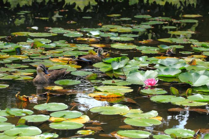 曼珠沙華以外も見頃の花が咲く「郷土の森博物館」
