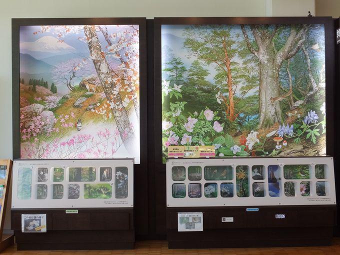 箱根の四季を彩る草花や動物たち