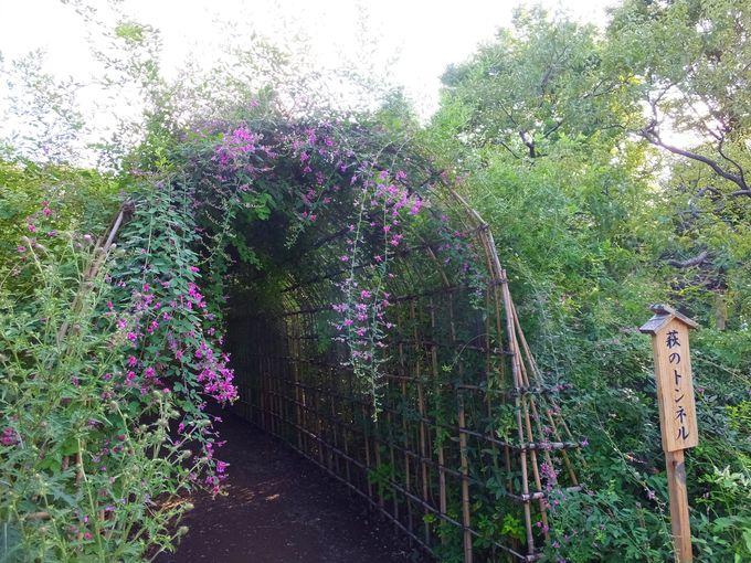 可憐な花がゆれる「ハギのトンネル」