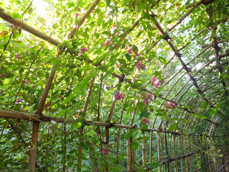 ハギのトンネルは必見!「向島百花園」は江戸っ子も愛した下町の花園