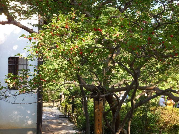 江戸の文化人達が作った下町の花園