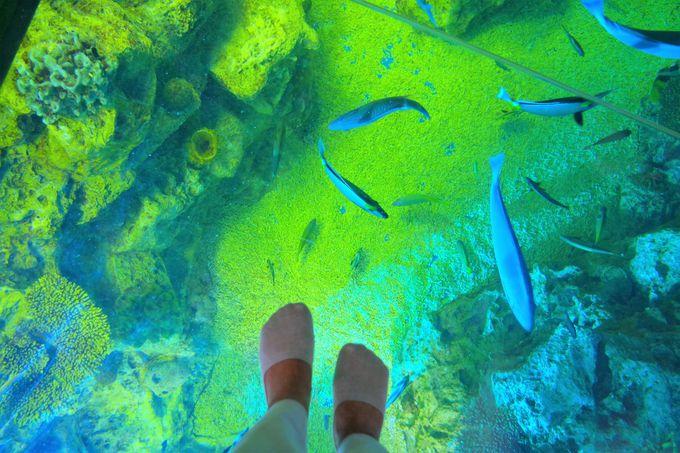 まるで竜宮城にいるみたいな「さんごの海」水槽