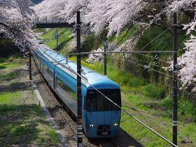 あふれる桜と鉄道のコラボ!神奈川県「山北鉄道公園」と桜並木
