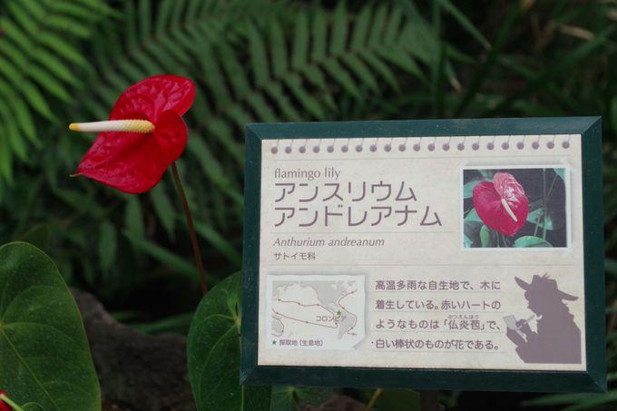 謎の女性植物学者と一緒に探検家気分が味わえる!