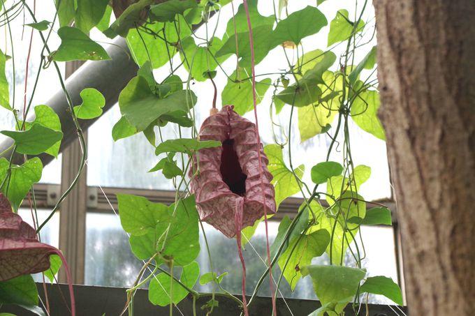 南国気分で楽しめるトロピカルドーム温室