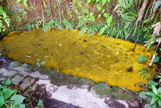 ヒカリモが光る「黄金(こがね)の泉」