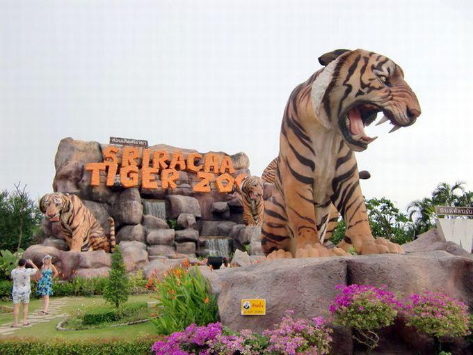 虎だらけの動物園!パタヤ近郊「シーラチャータイガーズー」