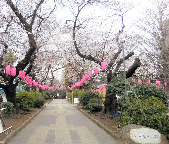 春にはお花見も楽しめる!お寺隣接の新井薬師公園