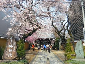 8がつく日は東京・新井薬師梅照院「八の市」でブラブラ散歩はいかが?