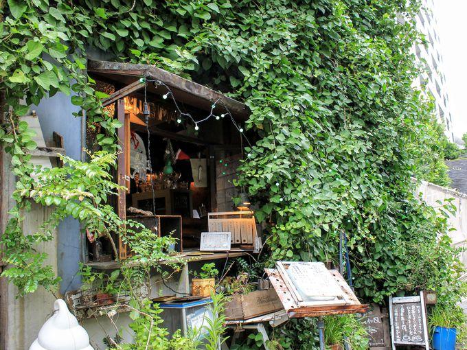 都会の中にポツンとたたずむ緑いっぱいの一軒家