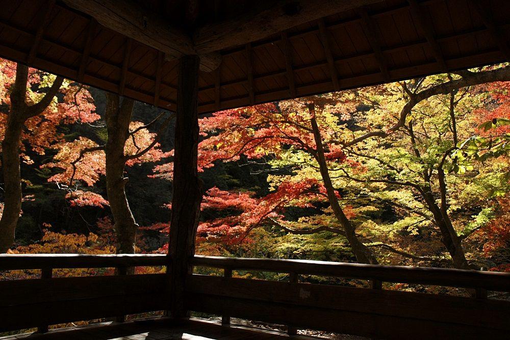 「もみじ回廊」の東屋から見る、色鮮やかなもみじ