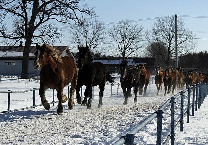 早起きして、馬たちの力強い姿を見に行こう!「家畜改良センター 十勝牧場」