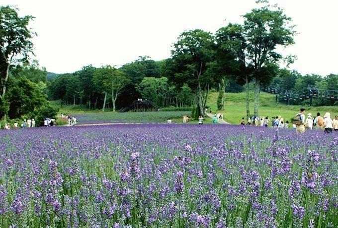 11.群馬県立自然史博物館/原田農園/たんばらラベンダーパーク(群馬県)