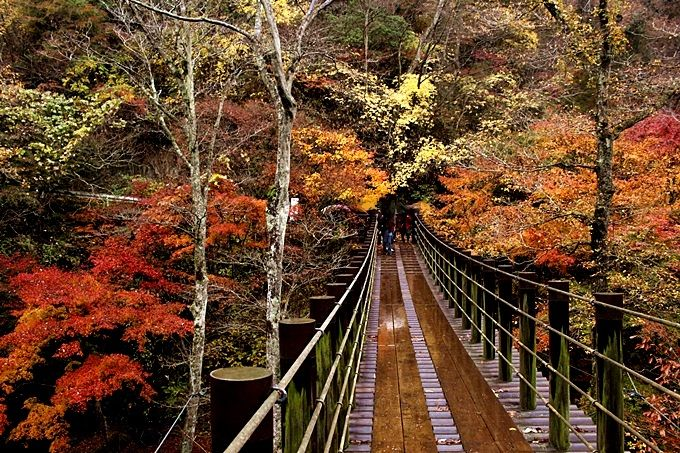 紅葉のトンネルが続く「花貫渓谷」