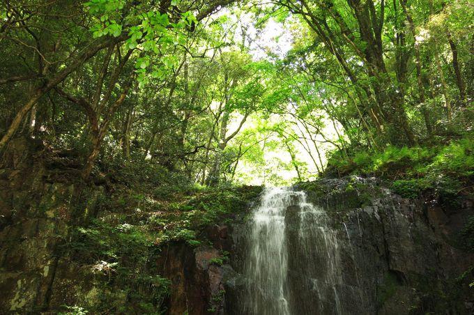 いたる所に流れ落ちる滝!マイナスイオンに癒されます
